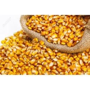 kukurydza kg karpie amury do nęcenia